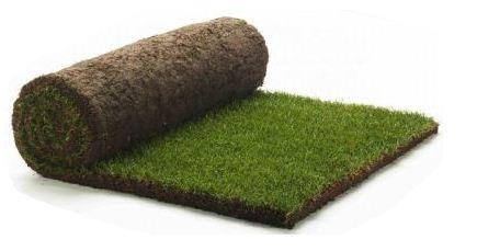 trawa z rolki producent