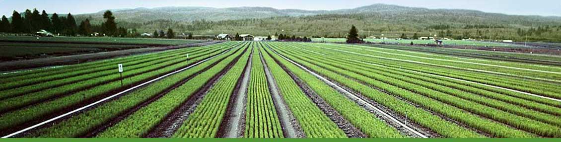 Nawadnianie dla rolnictwa